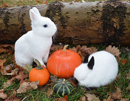 Hasenstall-Kaninchenstall-draussen-vor-dem-Winter-winterfest-machen