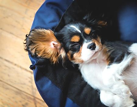 title-image-schlafender-hund