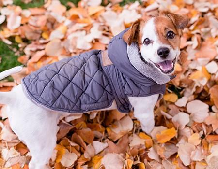 hundebekleidung-winter