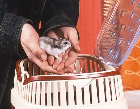 title-image-hamster-transportieren