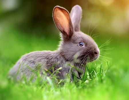 kaninchen-im-freien